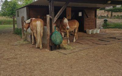 24h Heu 2.0 – Darmgesundheit für Pferde