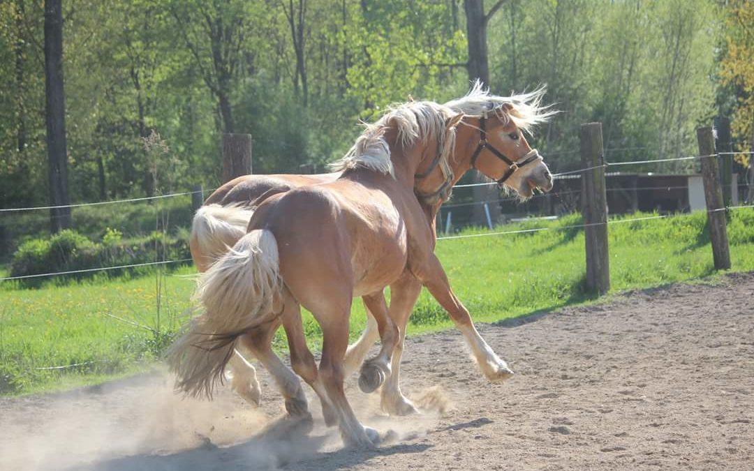 Das Pferd als Athlet